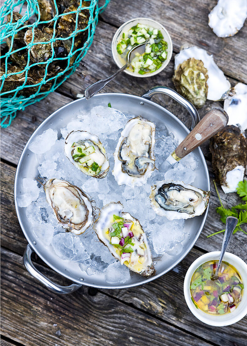 Hunting for Danish Oysters