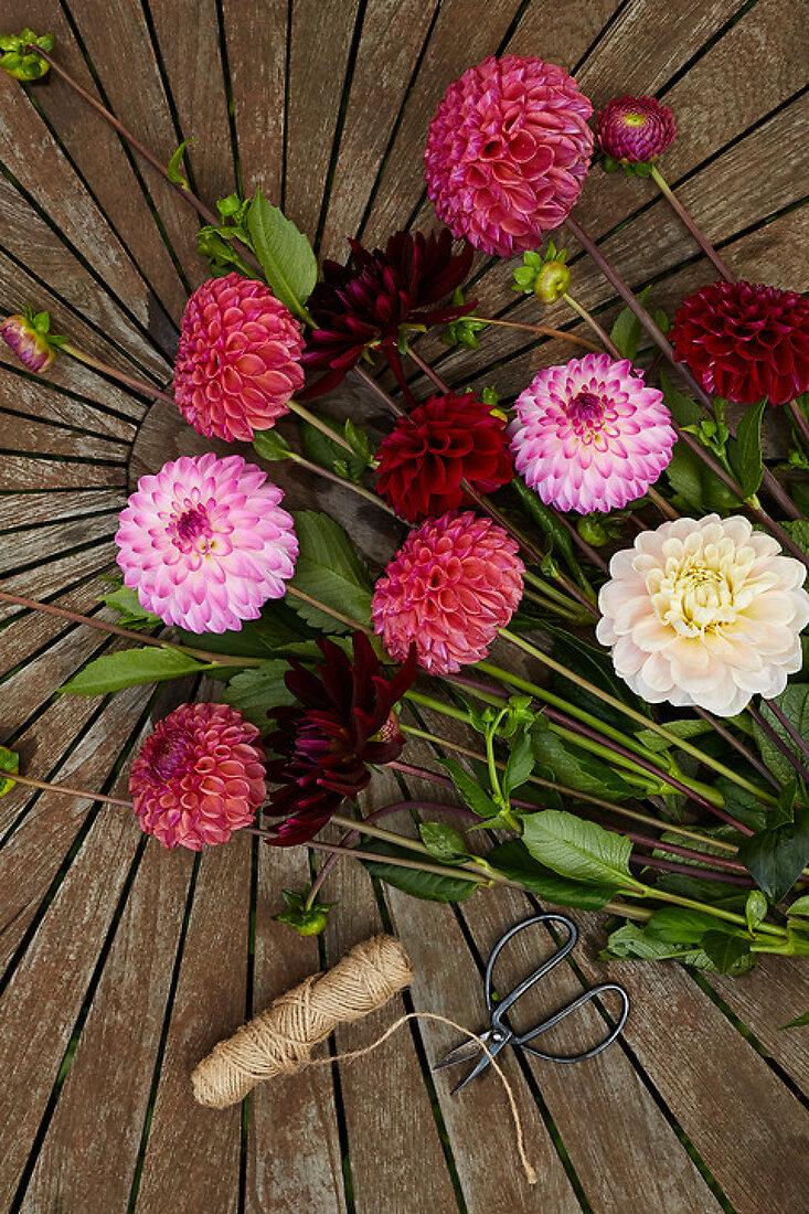Dahlias - A Colorful Beauty