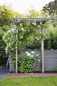 Aesthetic & Structured Garden