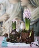 Blooming Christmas Flower Bulbs