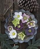 Christmas Roses - Blooming Wonders of Winter