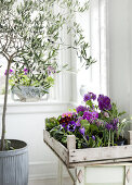 Houseplants of Spring