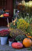 Pumpkin - Pretty & Colorful