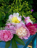 Peony - Convenient and Graceful