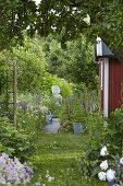 A Peony Garden