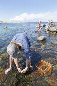 Seaweed Safari
