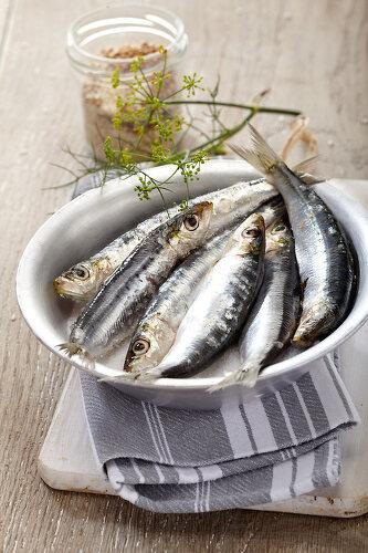 Silver Fish - 11336310