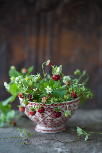 The Beauty of Berries - 12088598