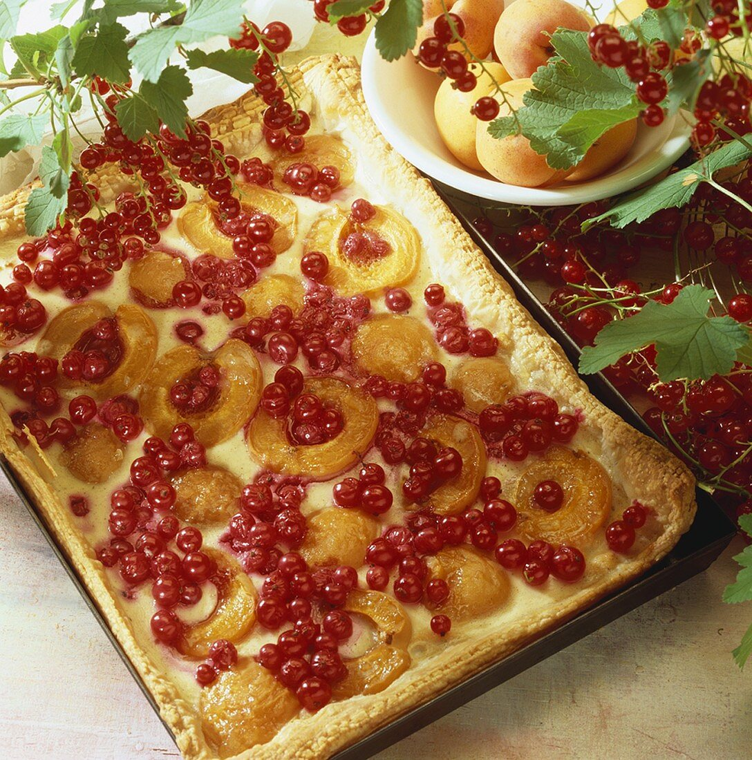 Apricot and blackcurrant tart on baking tray