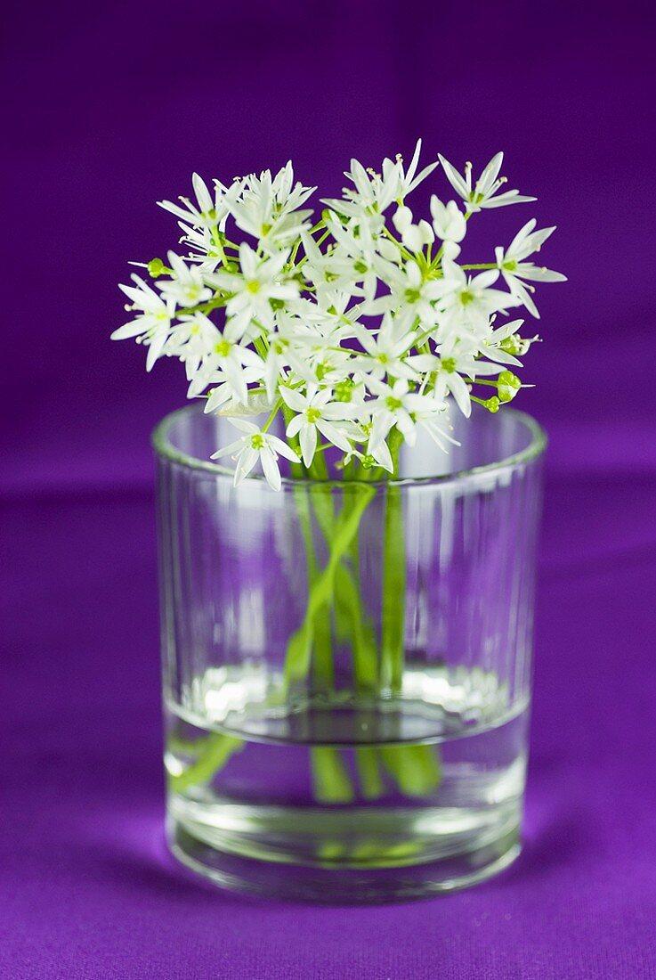 Ramsons (wild garlic) flowers in a glass