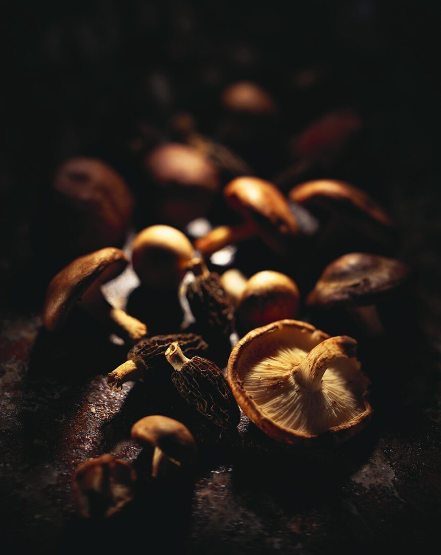 Mushroom potpourri: morels, shiitake and button mushrooms
