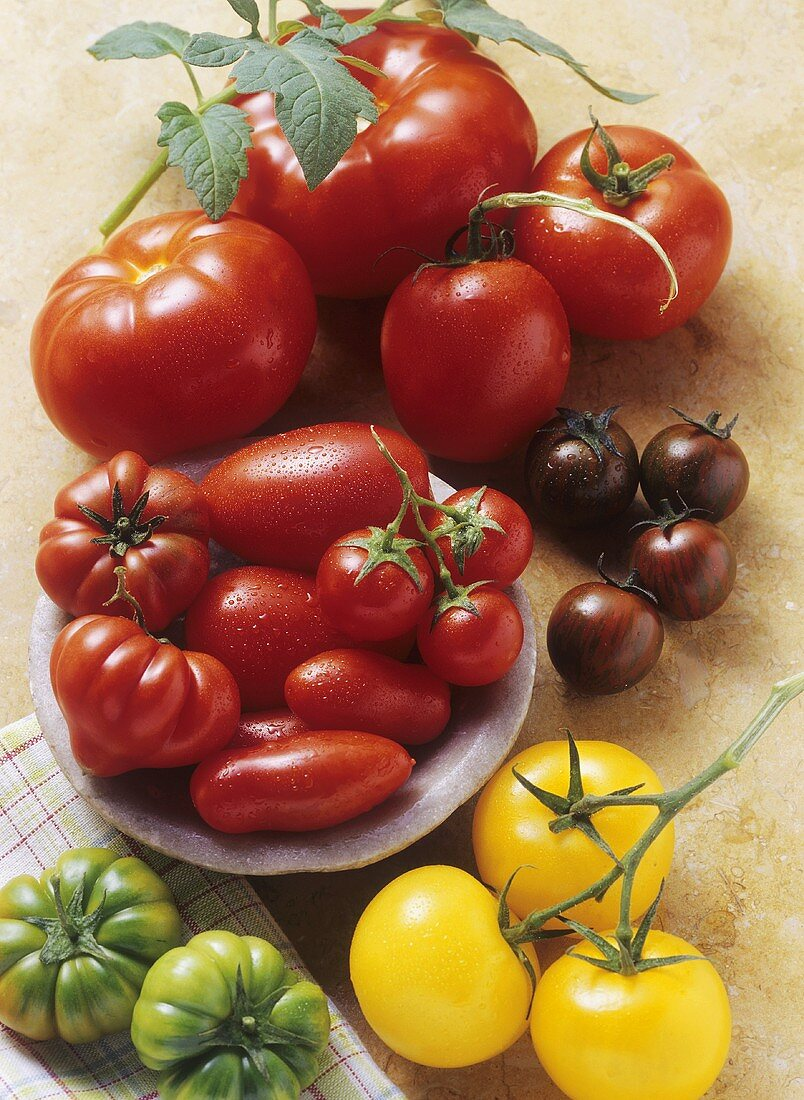 Still life with various types of tomatoes