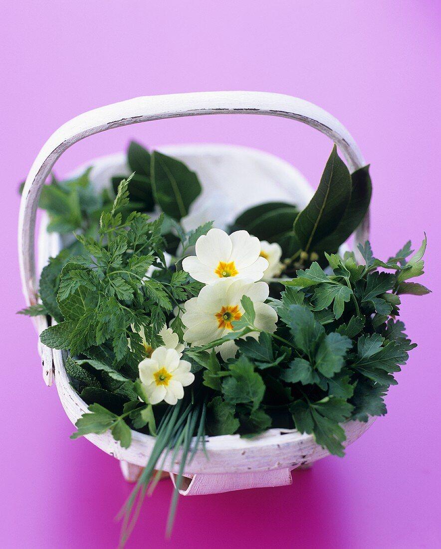 Basket of herbs and primroses