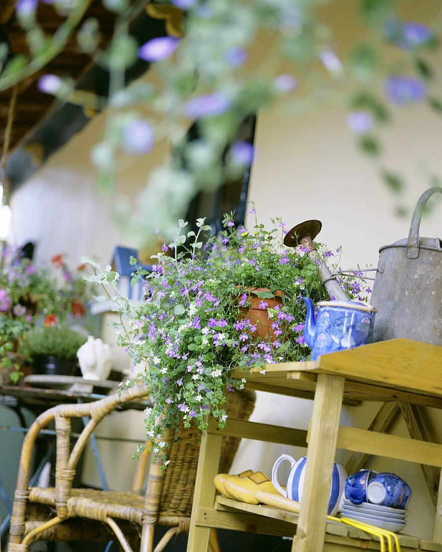 Lobelia and garden tools on small table