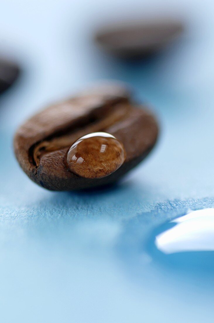 A drop of water on a coffee bean