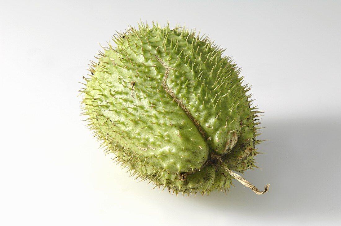 An exotic fruit (guanabana)