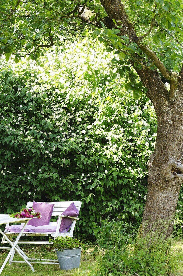 A jasmine hedge and garden furniture in a farmer's garden