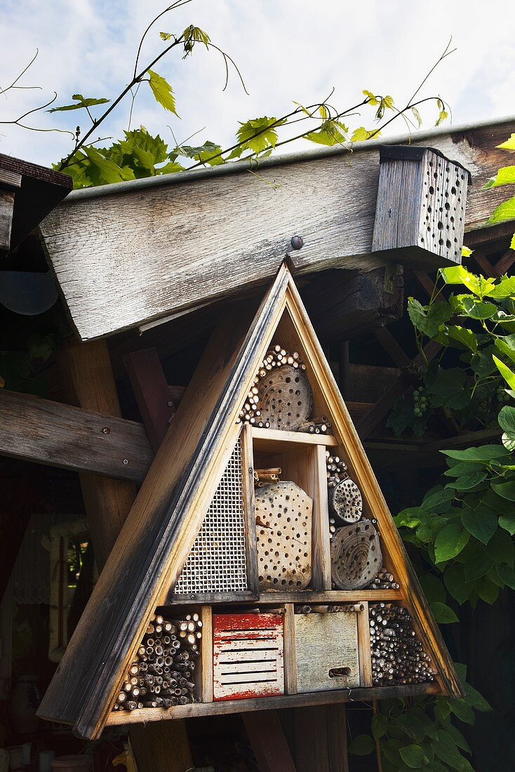 An insect hotel on a garden shed