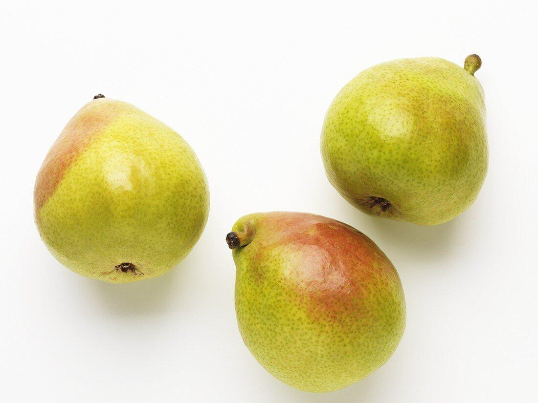 Three Anjou pears