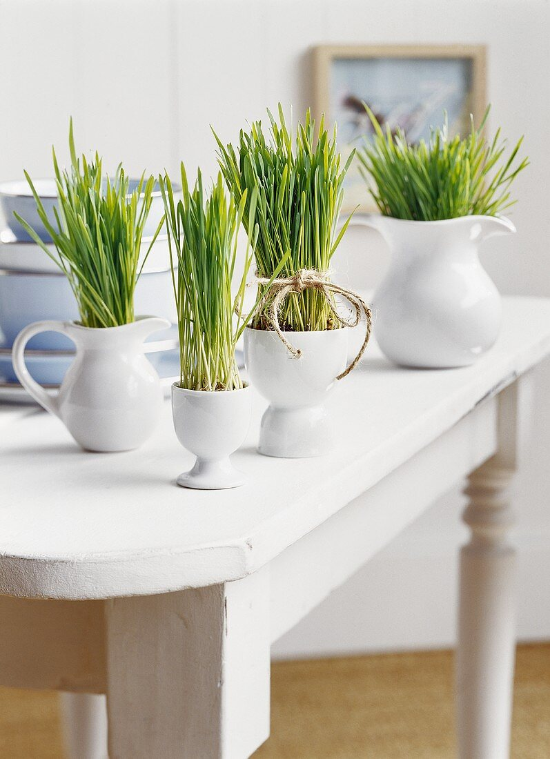 Ornamental grass in various ceramic jugs and bowls