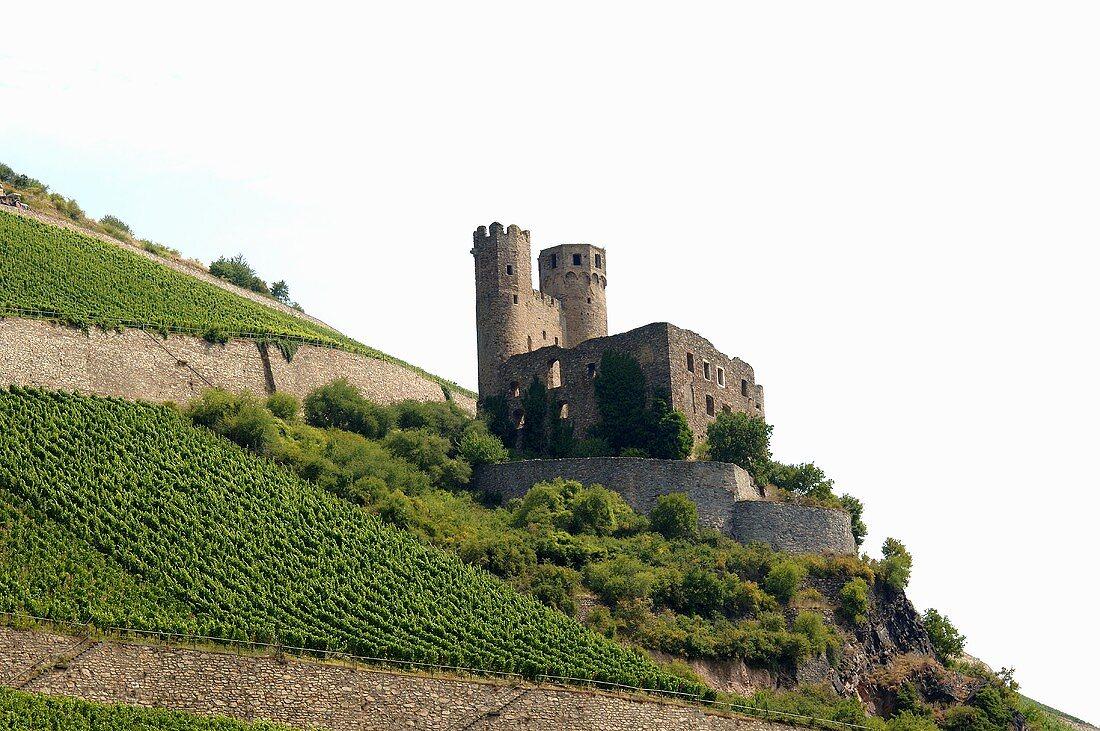 Vineyard with castle near Assmanshausen am Rhein, Germany