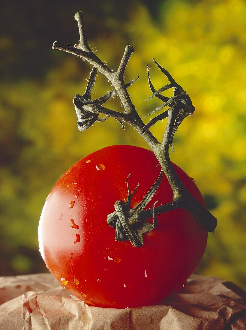Washed vine tomato on paper