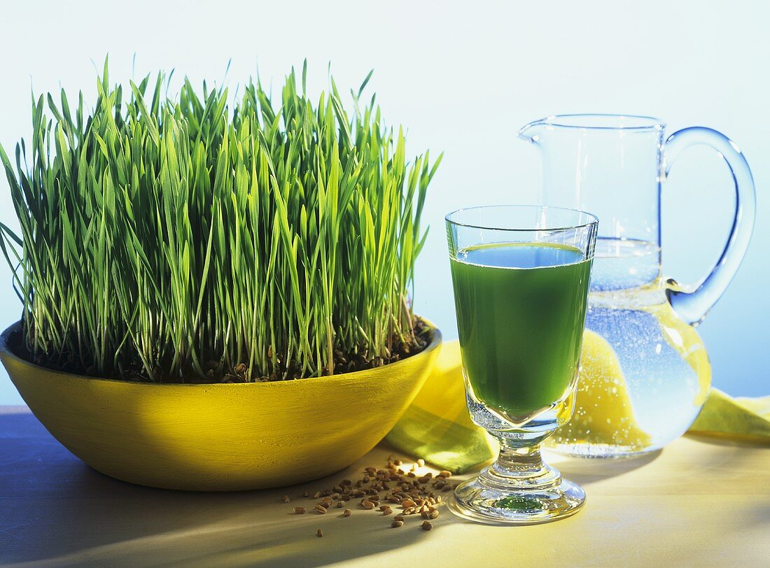 Wheatgrass with a glass of wheatgrass juice