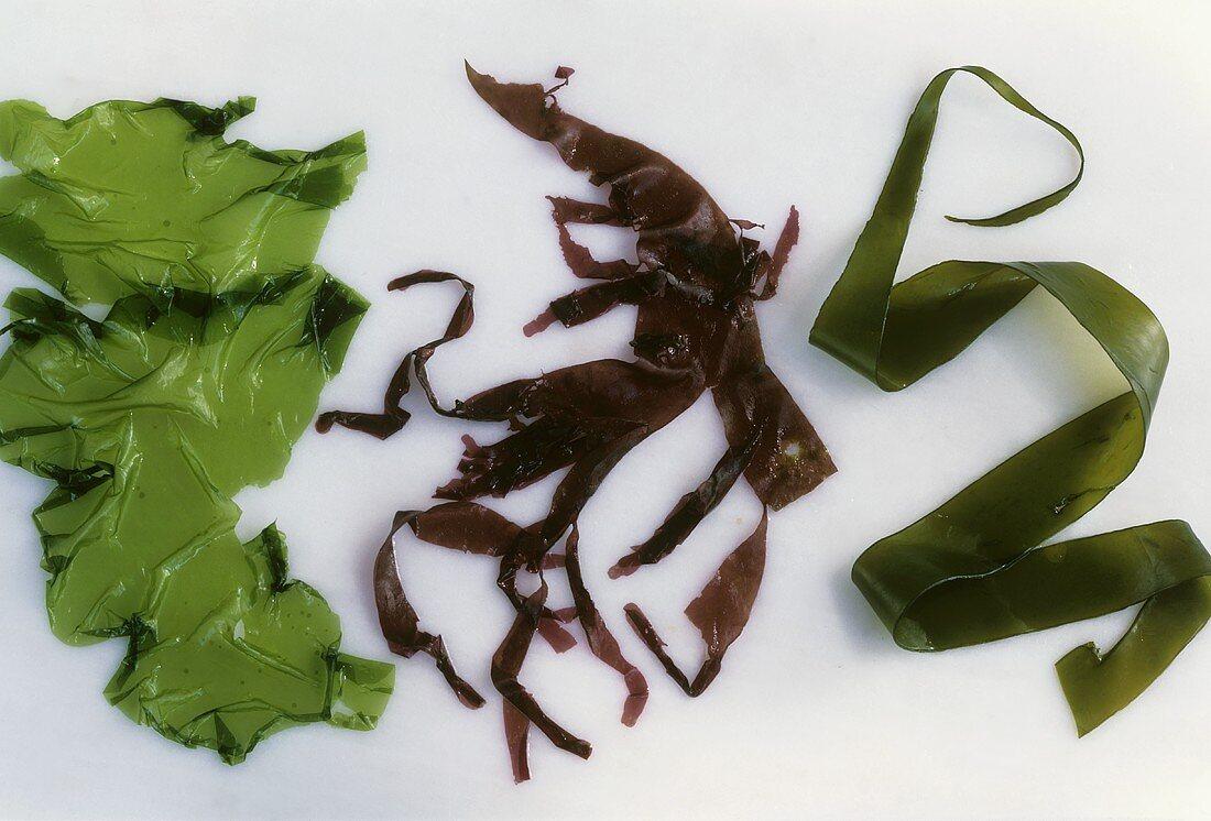 Green seaweed, red and brown algae