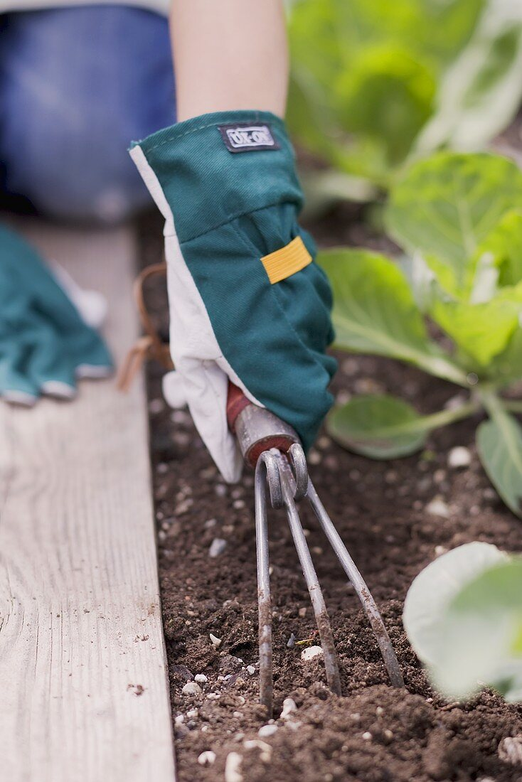 A child loosening the soil in a vegetable patch
