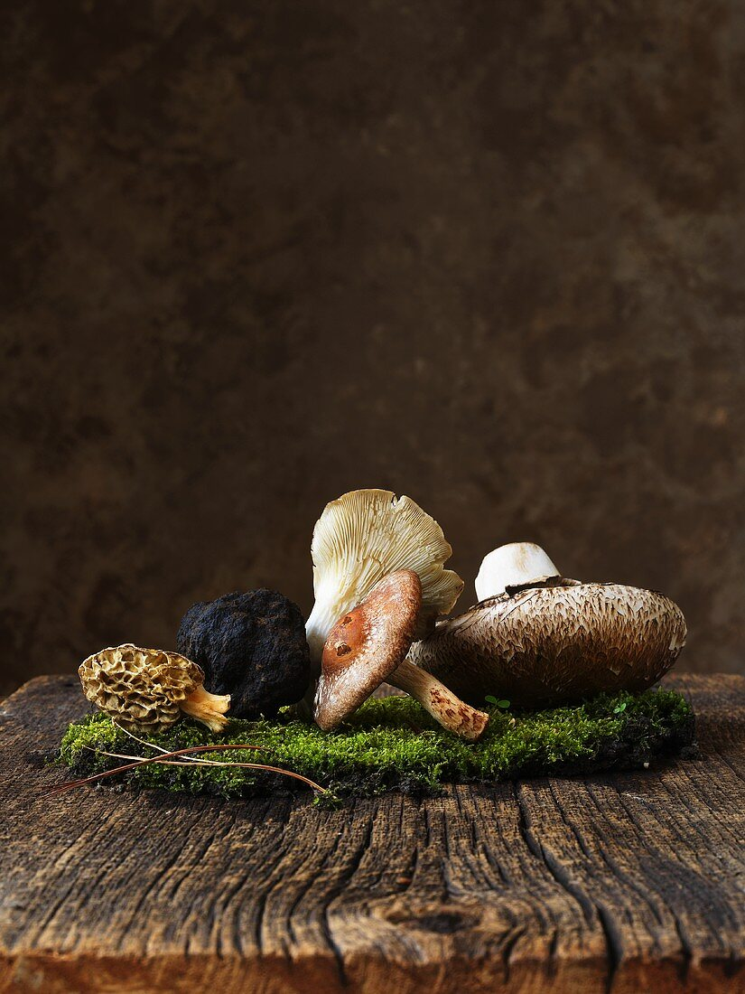 Assorted fresh mushrooms on moss and wood