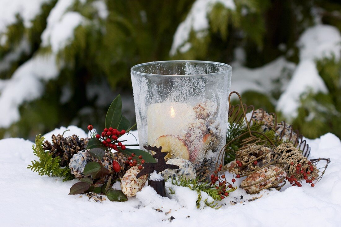 Windlight, bird food, rose hips and conifers in snow
