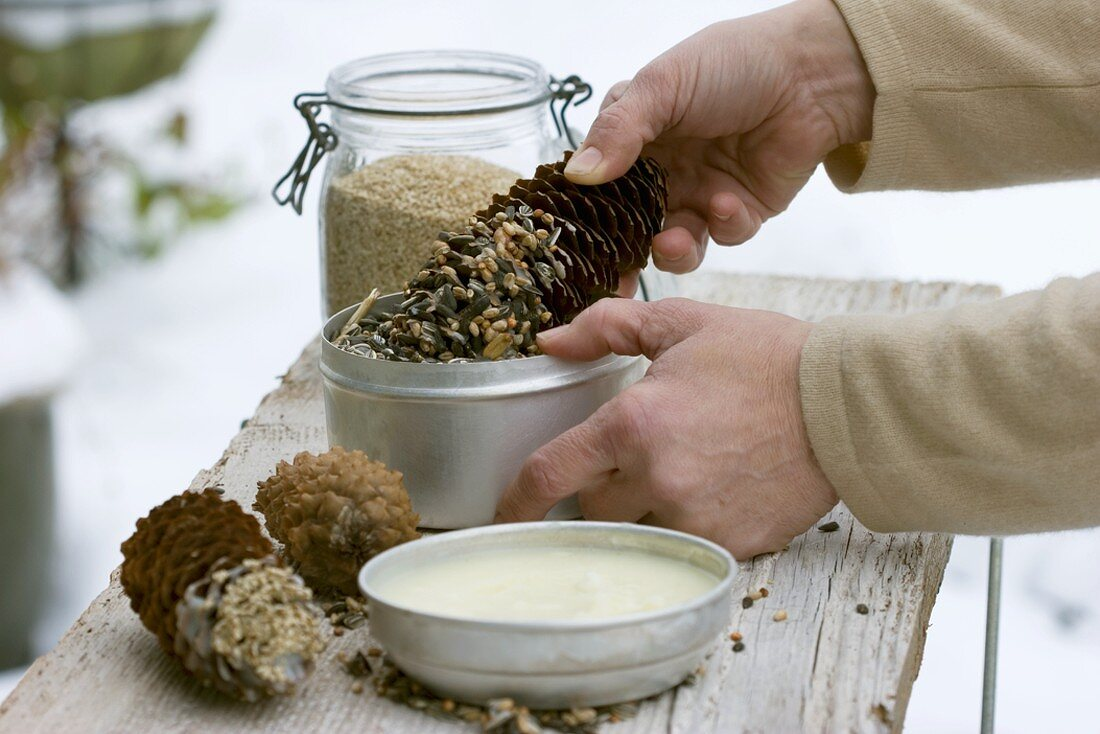 Dipping spruce cone in warm palm fat and bird seed