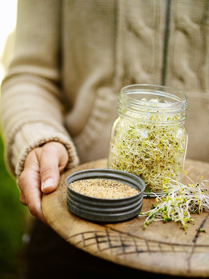 Alfalfa sprouts and red clover sprouts