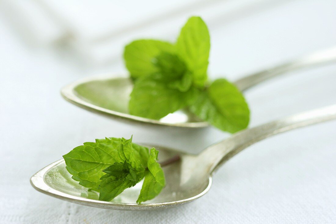 Silver spoons with peppermint leaves