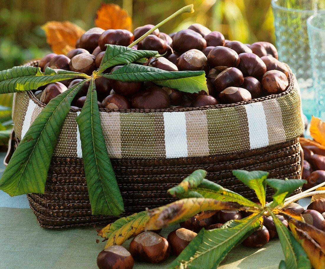 Basket of chestnuts and chestnut leaves