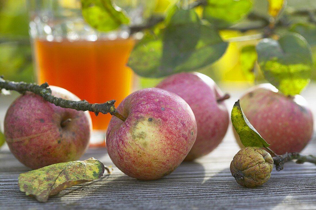 Apples, walnut & fermented apple juice on wooden table outside