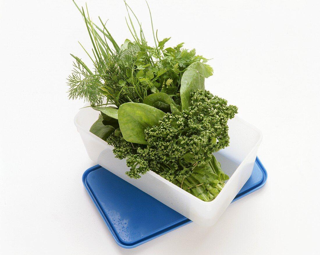 Fresh herbs in a food storage box