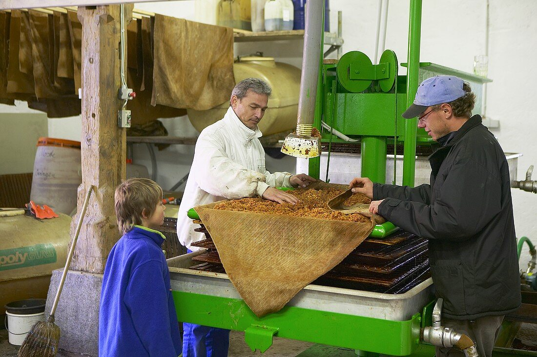 Workers in a cidery factory