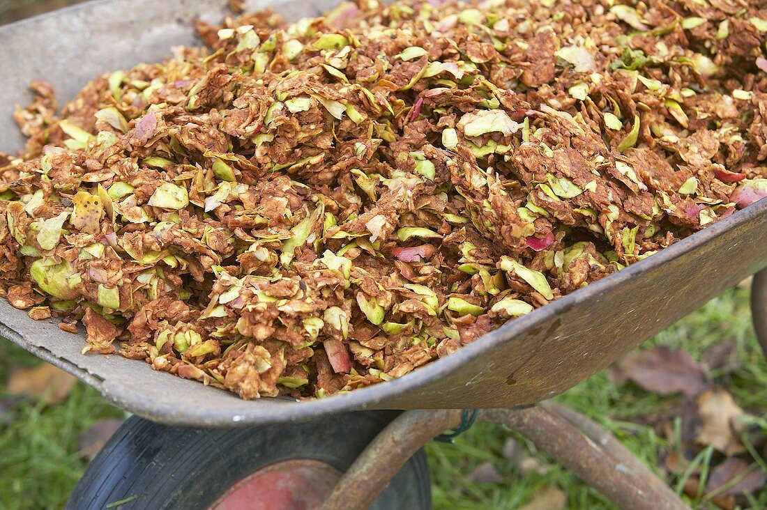 Rückstände von Apfeltrester in Schubkarre