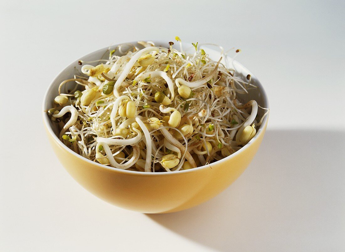 Sprouting seeds and sprouts in a bowl