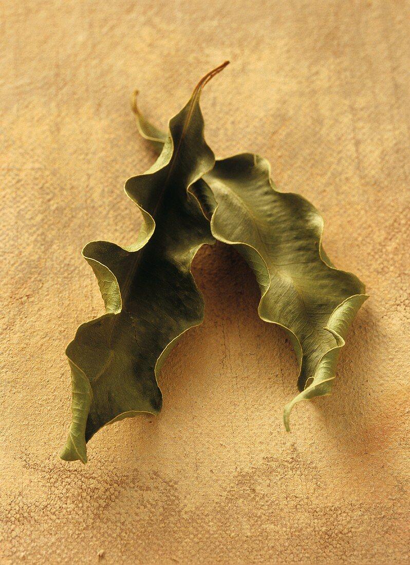 Anis-Myrthe (Syzygium anisatum, Australien)