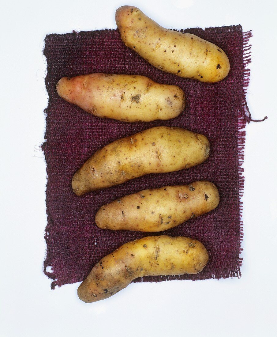 Potatoes, variety: Bamberger Hörnchen
