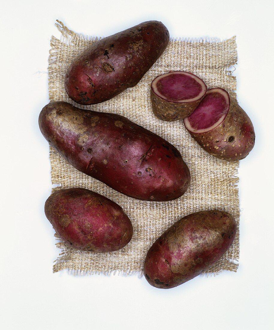 Potatoes, variety: Highland Burgundy Red