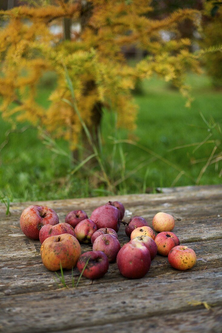Windfall fruit on a wooden table in a garden
