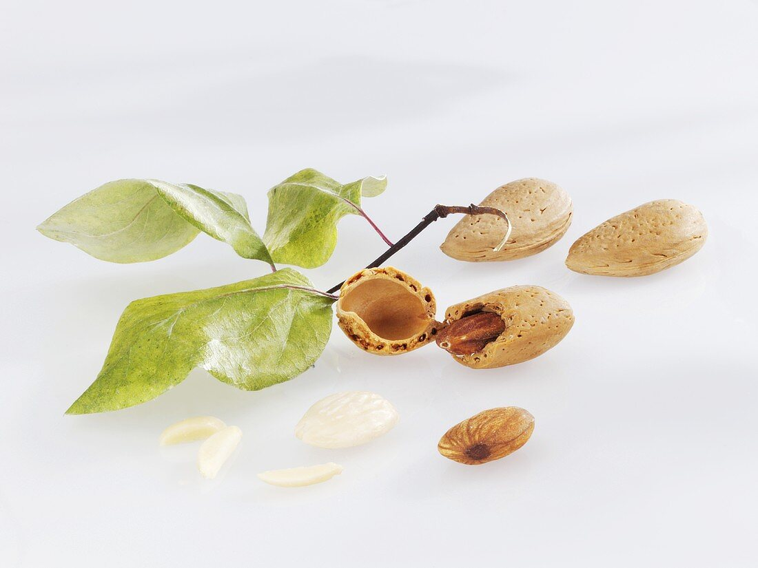 Almond twig and almonds with and without shells
