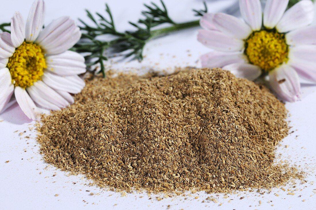 Mountain atlas daisy (anacyslus pyrethrum), powder and flowers