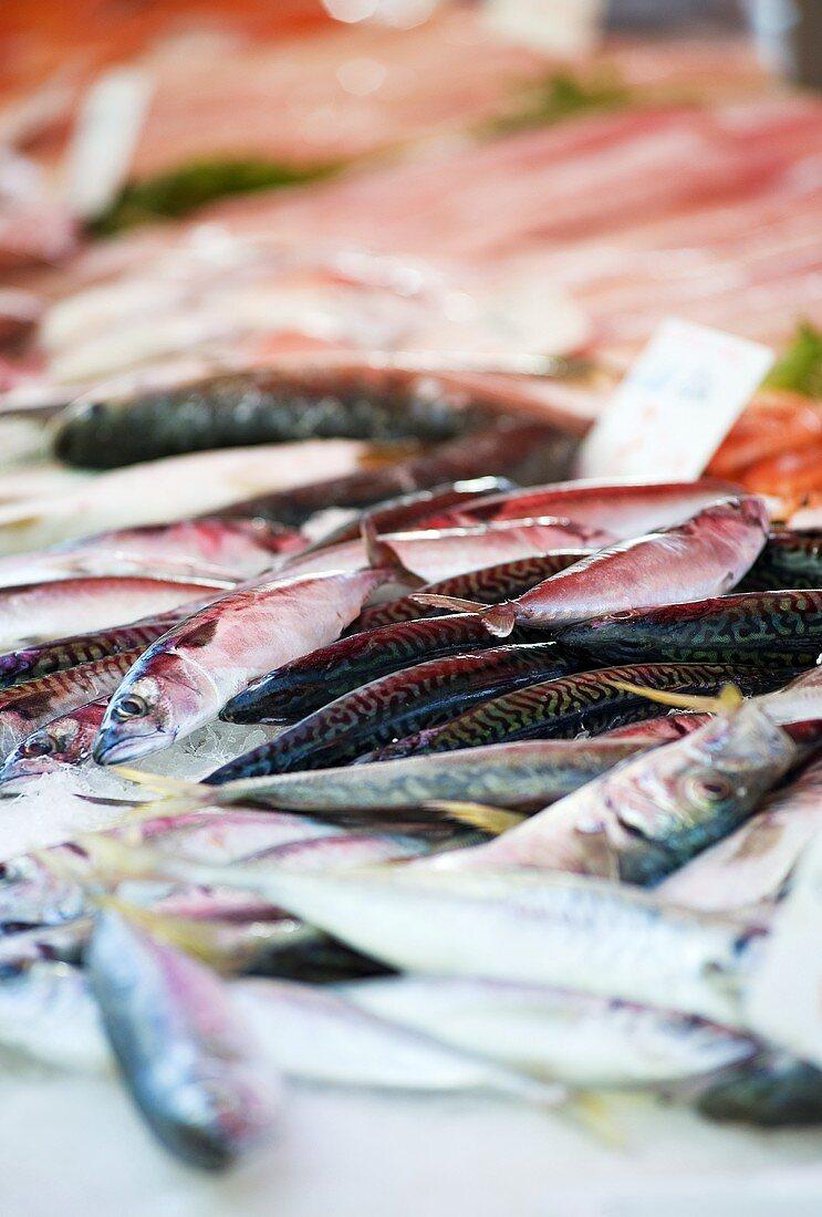 Fresh mackerel at a fish market (Nice, France)