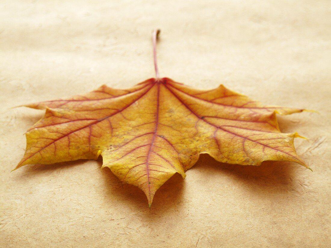 A autumnal oak leaf