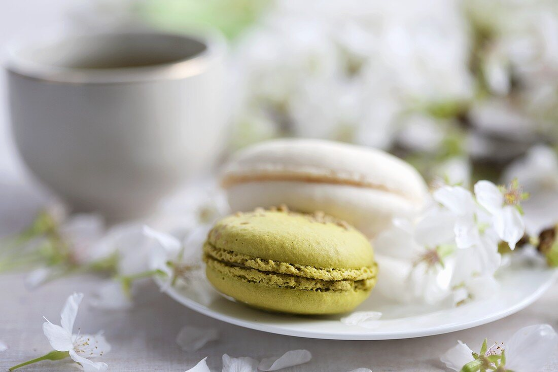 Green tea macaroons and champagne macaroons with cherry blossom