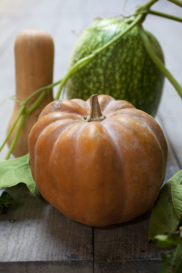 Various squashes with leaves